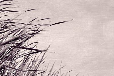 Photograph - River Grass by Michelle Calkins