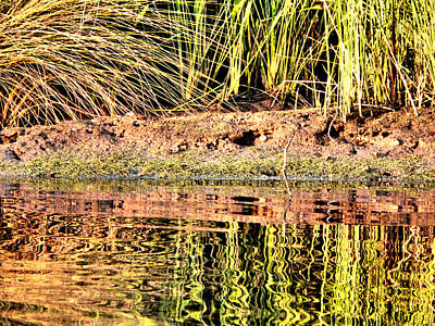 Photograph - River Grass Reflections by Kathy K McClellan