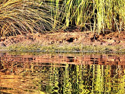 Photograph - River Grass Reflections by Kathy K McClellan