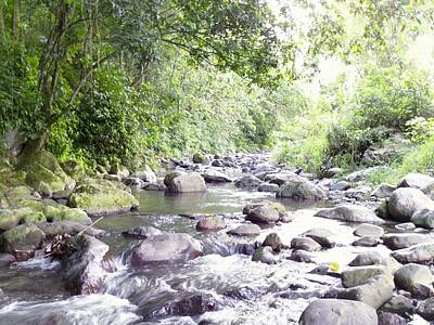 Photograph - River In Adjuntas by Walter Rivera Santos