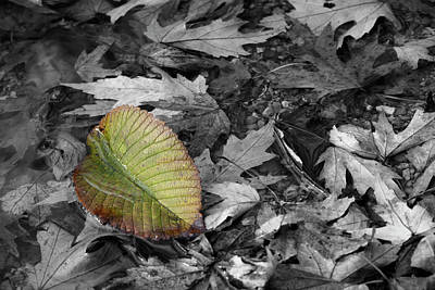 Photograph - River Leaf by Dylan Punke