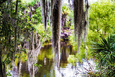 Interior Design Photograph - River Moss by J Darrell Hutto