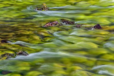 River Moss Print by Leland D Howard