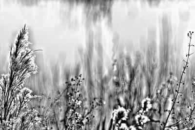 Photograph - River Of Grass by Roberto Aloi