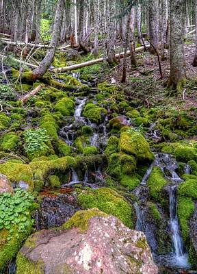 Photograph - River Of Moss by Peter Mooyman