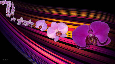 Photograph - River Of Orchids by Gary Crockett
