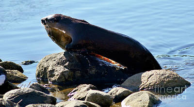 Photograph - River Otter And Catch Of The Day by Terry Elniski