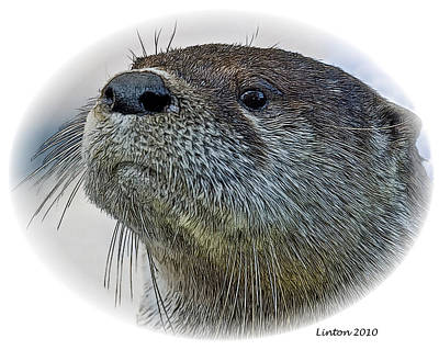 Otter Digital Art - River Otter by Larry Linton