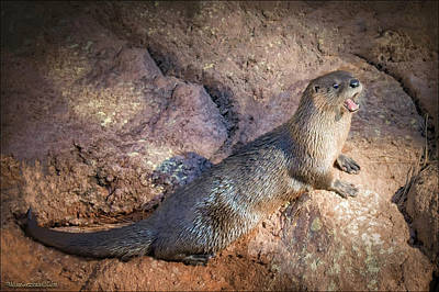 Grateful Dead - River Otter by LeeAnn McLaneGoetz McLaneGoetzStudioLLCcom
