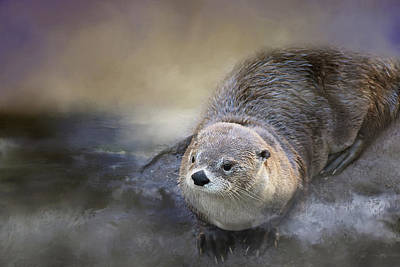 Photograph - River Otter by TnBackroadsPhotos
