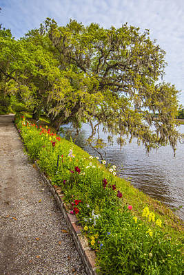 Photograph - River Path 1 by Steven Ainsworth