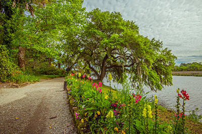 Photograph - River Path II by Steven Ainsworth