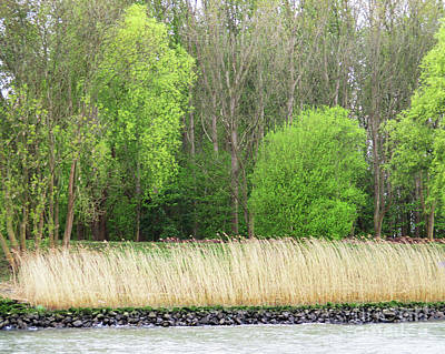 Photograph - River Reeds by Randall Weidner