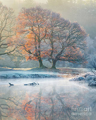River Reflections - Winter Art Print by Tony Higginson