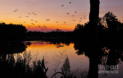 Moody Trees - River sunset by Kaye Menner