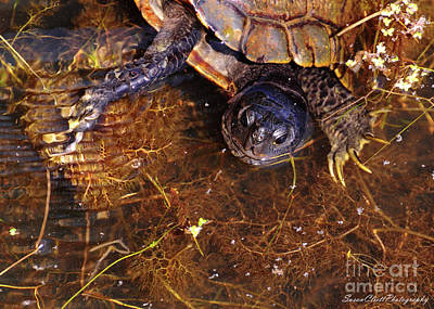 Photograph - River Turtle by Susan Cliett