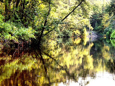 Photograph - River Woods Reflections by Kathy K McClellan