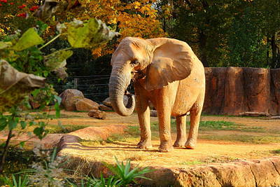 Photograph - Riverbanks Zoo 2011 D by Joseph C Hinson Photography