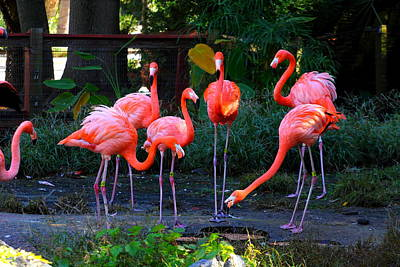 Photograph - Riverbanks Zoo 2011 F by Joseph C Hinson Photography