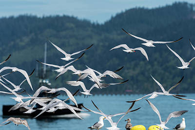 Photograph - Riverfront Terns by Robert Potts