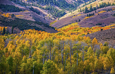Photograph - Rivers Of Fall Aspen by Lynn Bauer