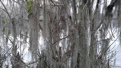 Tree Photograph - Rivers Past by John Gerstner