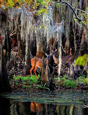 Photograph - Riverside Deer by Sheri McLeroy