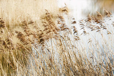Photograph - Riverside Grass by David Hare
