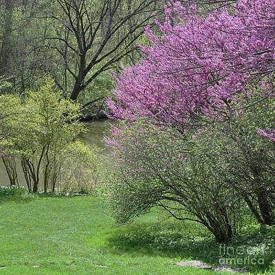 Photograph - Riverside Spring by Ann Horn