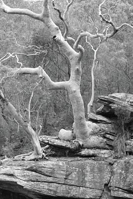 Photograph - Riverside Tree No. 7-1 by Sandy Taylor