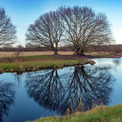 Photograph - Riverside Trees, Dedham Vale by Gary Eason