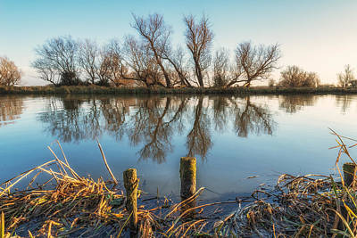 Art Print featuring the photograph Riverside Trees by James Billings