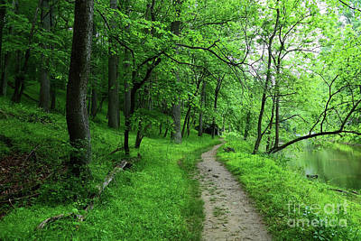Photograph - Riverside Woodland Trail In Patapsco Valley State Park by James Brunker