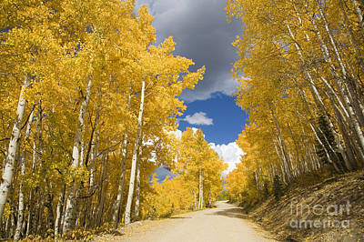 Road Amid Aspens 1 Art Print by Ron Dahlquist - Printscapes