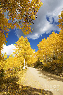 Road Amid Aspens 2 Art Print