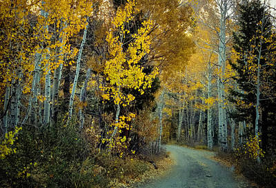 Photograph - Road In Lundy Canyon - Fall Foliage by Jerome Obille