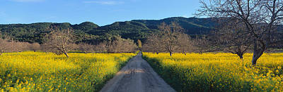 Ojai Wall Art - Photograph - Road In Mustard Field by Panoramic Images