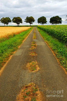 Landscapes Royalty-Free and Rights-Managed Images - Road in rural France by Elena Elisseeva