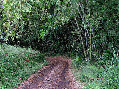 Road Into Bamboo Forest Art Print by Jack Herrington