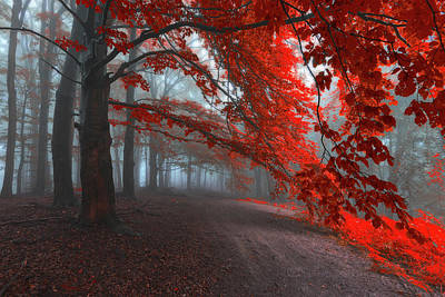 Of Trees Photograph - Road Of Seraphines by Janek Sedlar