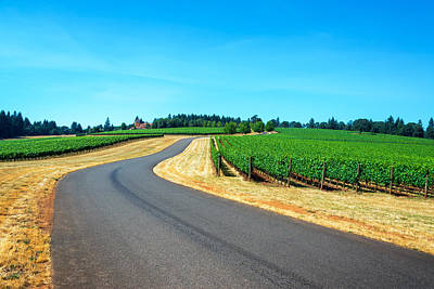 Pinot Noir Photograph - Road Through A Vineyard by Jess Kraft