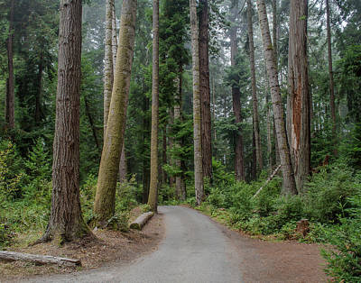 Photograph - Road Through Redwoods by Greg Nyquist