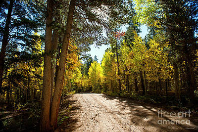 Photograph - Road Through The Aspens by David Arment