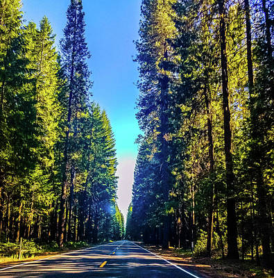 Photograph - Road Through The Forest by Jonny D