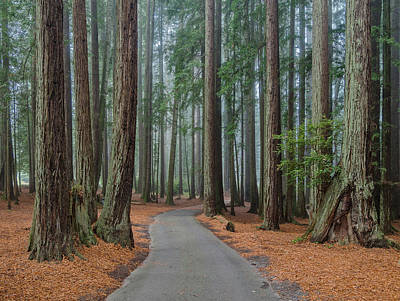 Photograph - Road Through The Redwoods by Greg Nyquist