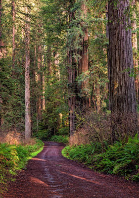 Photograph - Road Through The Redwoods by Loree Johnson