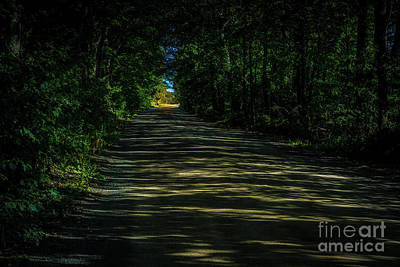 Photograph - Road Through The Woods by Roger Monahan