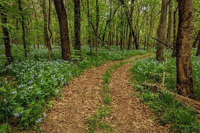 Photograph - Road Through The Woods by Scott Bean