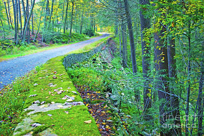 Winding Road Photograph - Road Through Woods by Laura D Young