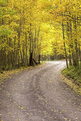 Photograph - Road To Autumn  by Denise Bush